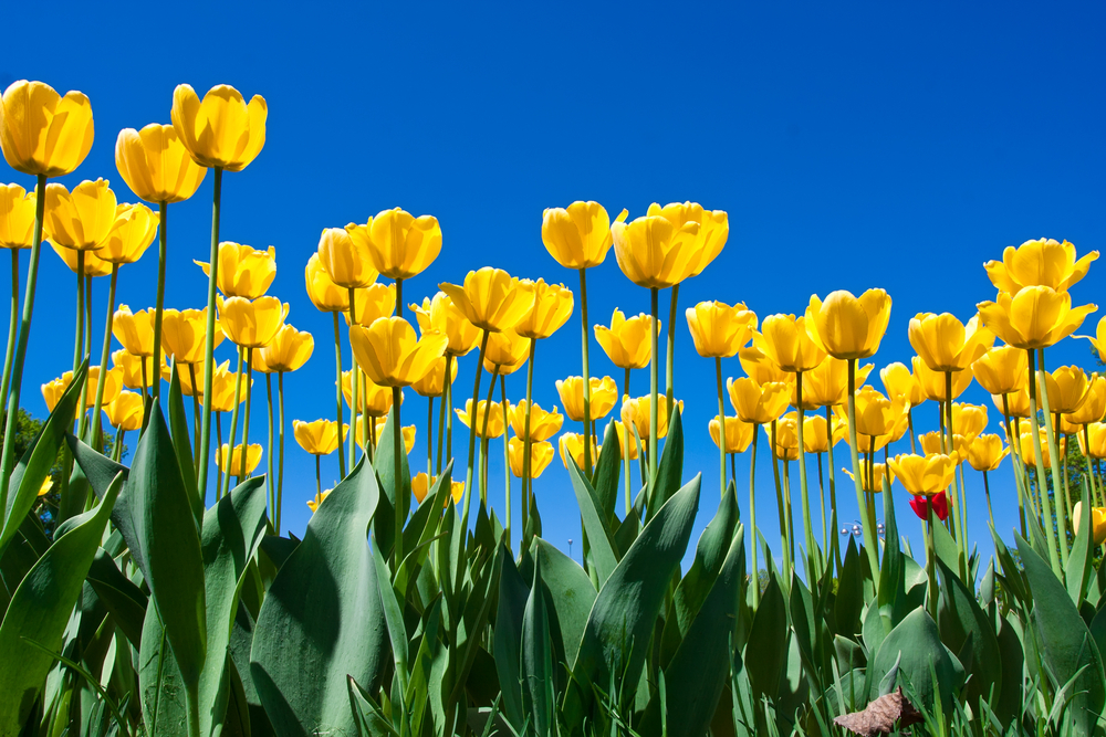 E2a684de4b2ed630d1929e5e98fe1007 showers into may flowers may e2a684de4b2ed630d1929e5e98fe1007 showers into may flowers may flowers image1000 667 mightylinksfo